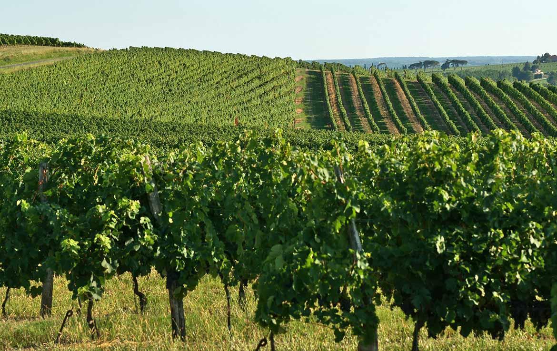 Location meublée Fidexi - Villa Valrose à Latresne - Au coeur du vignoble bordelais